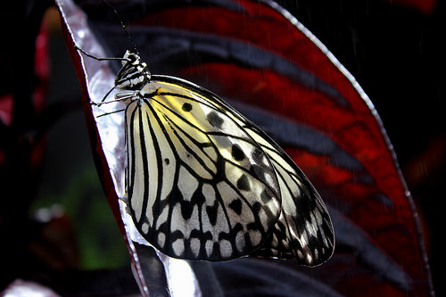PG Paper Kite Butterfly in conservatory by Breanne Wasinger