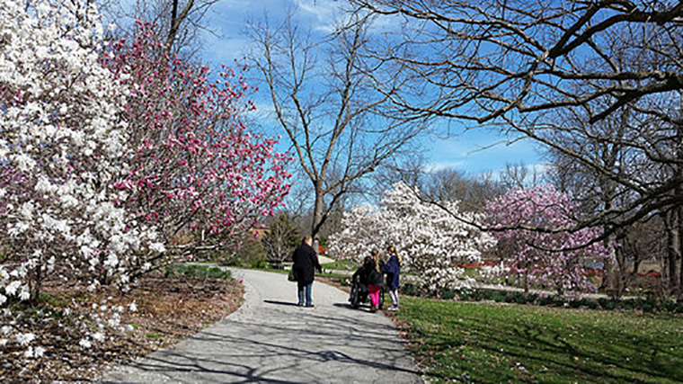 PG stroll through magnolias