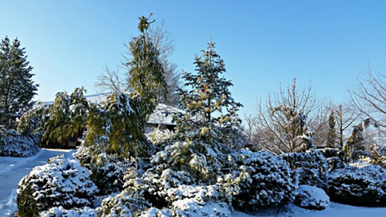 The always colorful Conifer Garden
